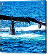 Two Whale Tails Acrylic Print