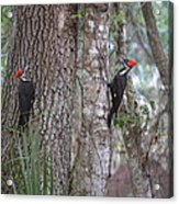 Two Woodpeckers Acrylic Print