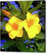 Two Yellow Flowers Acrylic Print