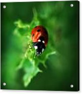 Ultra Electro Magnetic Single Ladybug Acrylic Print