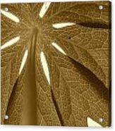 Umbrella In Sepia Acrylic Print