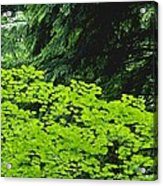 Umbrella Of Trees In Forest Acrylic Print