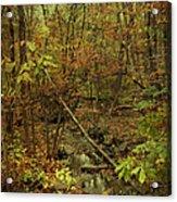 Unami Creek Feeder Stream In Autumn - Green Lane Pa Acrylic Print