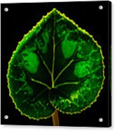 Under Leaf Acrylic Print