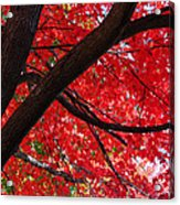 Under The Reds Acrylic Print