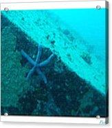 Under The Sea C Acrylic Print