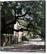 Under The Tree In Williamsburg Acrylic Print