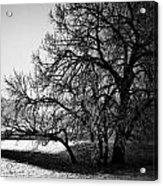 Under The Waiting Tree Acrylic Print