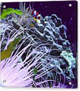 Undersea World Acrylic Print by Robin Hewitt