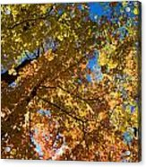 Underside Of Fall Acrylic Print