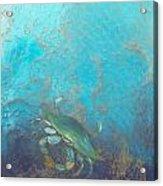 Underwater Blue Crab Acrylic Print