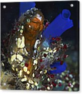 Underwater Bouquet Formed By Cluster Acrylic Print