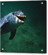 Underwater Close-up Of Smiling Acrylic Print