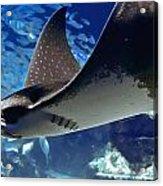 Underwater Flight Acrylic Print