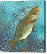 Underwater Grouper Acrylic Print