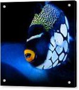 Underwater Surprises 1 Acrylic Print