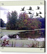 Unicorn Lake - Geese Acrylic Print