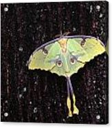 Unique Butterfly Resting On Tree Bark Acrylic Print