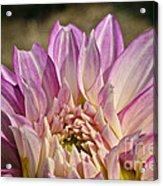 Unnamed Dahlia 3002 Acrylic Print