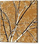 Untitled Tree Acrylic Print by Carrie Kouri