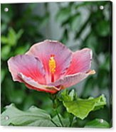 Unusual Flower Acrylic Print