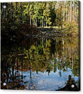 Up Down Beauty All Around Acrylic Print