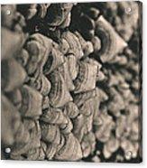 Up The Mushroom Tree Acrylic Print