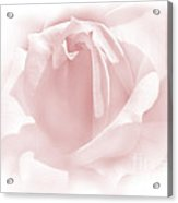 Upon A Cloud Pink Rose Flower Acrylic Print