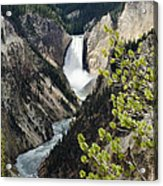 Upper Falls Of The Yellowstone River Acrylic Print