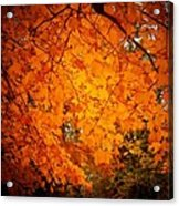 Upperville Leaves Acrylic Print