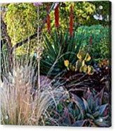 Urban Garden With Cactus Acrylic Print