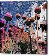 Urban Poppy Acrylic Print