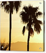 Usa, California, Palm Springs, Palm Trees Silhouetted At Sunset Acrylic Print
