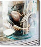 Usa, New York State, New York City, Brooklyn, Shells In Jar Acrylic Print by Jamie Grill