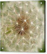 Usa, Pennsylvania, Close-up View Of Dandelion Acrylic Print