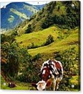Vaca Acrylic Print