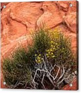 Valley Of Fire Yellow Vegetation Nevada Acrylic Print
