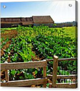 Vegetable Farm Acrylic Print by Carlos Caetano