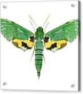 Verdant Sphinx Hawkmoth Acrylic Print