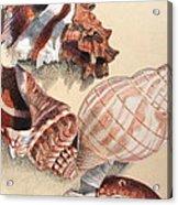 Vertical Conch Shells Acrylic Print