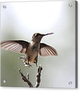 Vertical Takeoff Acrylic Print
