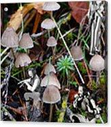 Very Tull Mushrooms Acrylic Print