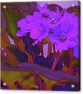 Very Violets  Acrylic Print