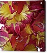 Vibrant Gladiolus Acrylic Print by Susan Herber