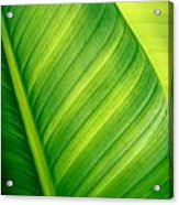 Vibrant Green Leaf Acrylic Print