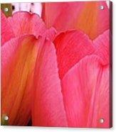 Vibrant Tulips Acrylic Print