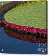 Victoria Amazonica Leaf Acrylic Print
