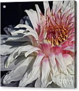 Victoria Water Lily Acrylic Print