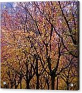 View Of Prague From Mala Strana Park Acrylic Print