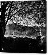 View Through The Trees Acrylic Print